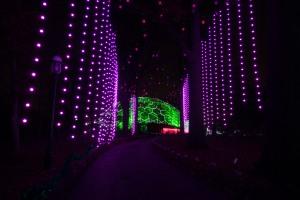 Garden Glow-32