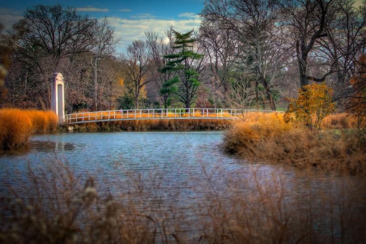 forest-park-suspension-bridge-2